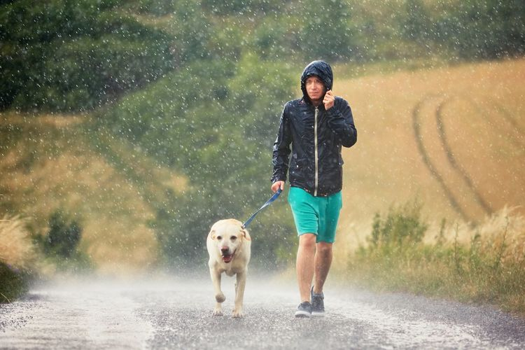 Young man walking with his dog (labrador retriever) in heavy rain on the rural road. Adventure Countryside Dog Dog Walking Drop Friendship Hiking Jacket Journey Labrador Man People Pets Rain Raindrops Rainy Days Road Rural Rural Scene Togetherness Travel Trip Walking Weather Wet