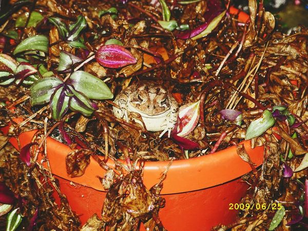 The frog made my plant his home. Sweet Frog Relaxing Check This Out Hello World I Love Taking Pictures <3 EyeEm Nature Lover Enjoying Life Crazy Stuff The Story Behind The Picture