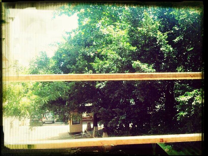 Green ishana society First Eyeem Photo