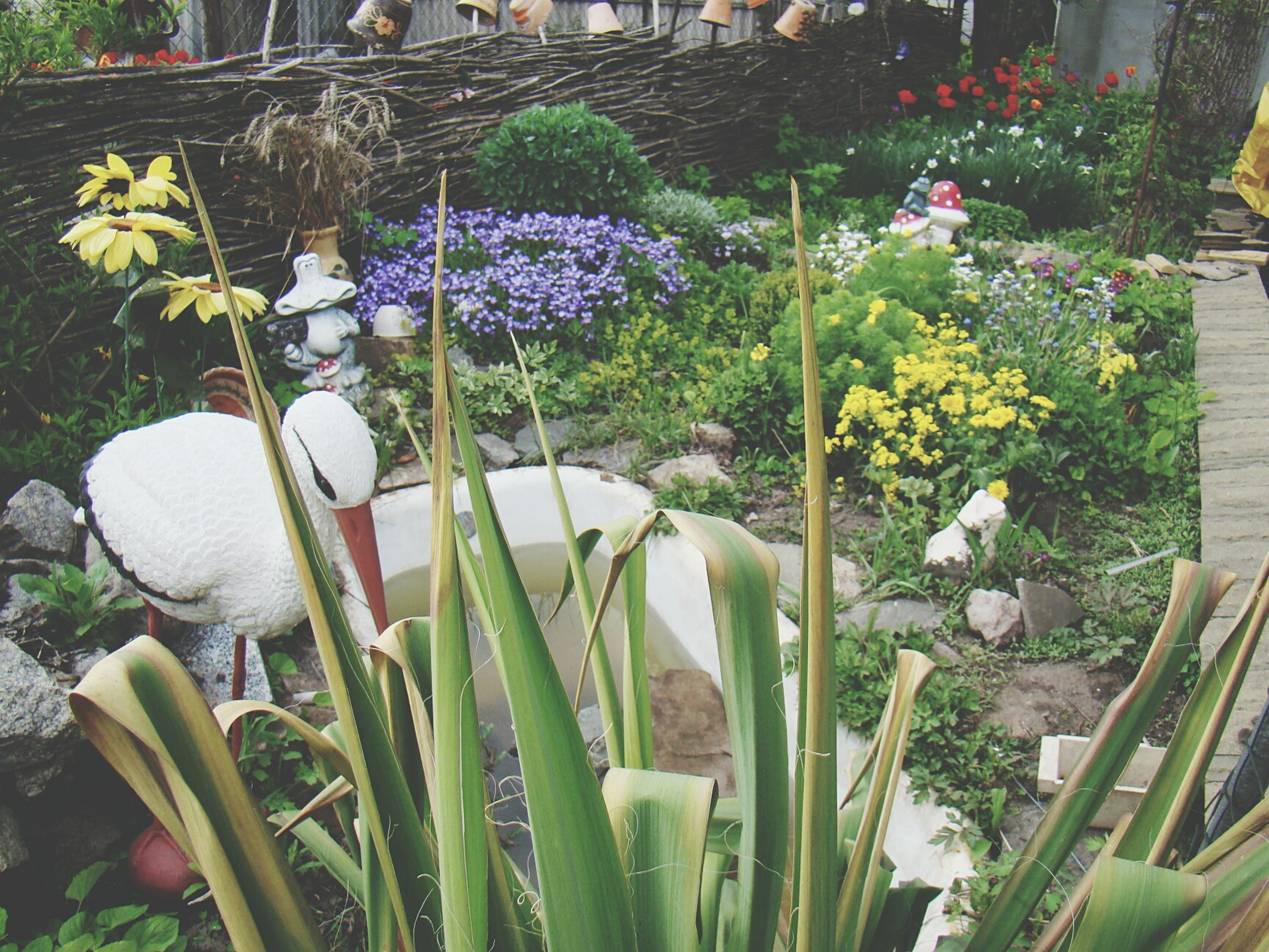 flower, plant, growth, fragility, freshness, petal, nature, beauty in nature, blooming, white color, flower head, potted plant, leaf, in bloom, day, no people, front or back yard, outdoors, park - man made space, green color