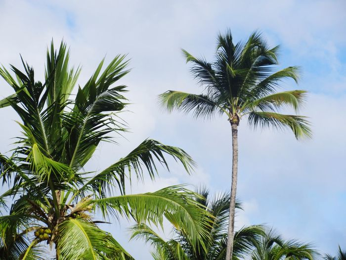 Tree Plant Sky Low Angle View Growth Palm Tree Tropical Climate No People Cloud - Sky Nature Tranquility Green Color Day Tree Trunk Coconut Palm Tree Beauty In Nature Leaf