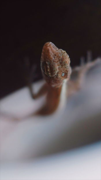 Lizard Lizard Nature Baby Lizard Gecko Macro Macro Photography Macro Photography Beauty In Nature Nature Photography Nature Naturelovers Nature_collection Close-up Indoors  No People One Animal Science Animal Themes Day