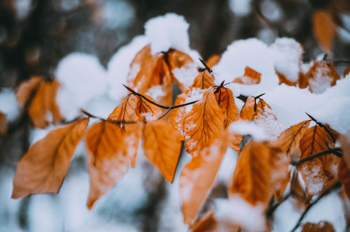 EyeEm Best Shots EyeEnNewHere Nikon Poland Snow ❄ Winter Wintertime Beauty In Nature Beauty In Nature Cold Cold Days Cold Temperature Day Kaszuby Kaszuby Eyeem Leaf Nature Nature_collection No People Outdoors Poland Eyeem Snow Wildlife Winter Winter Trees