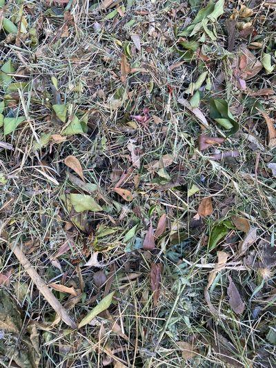 Dry grass Land