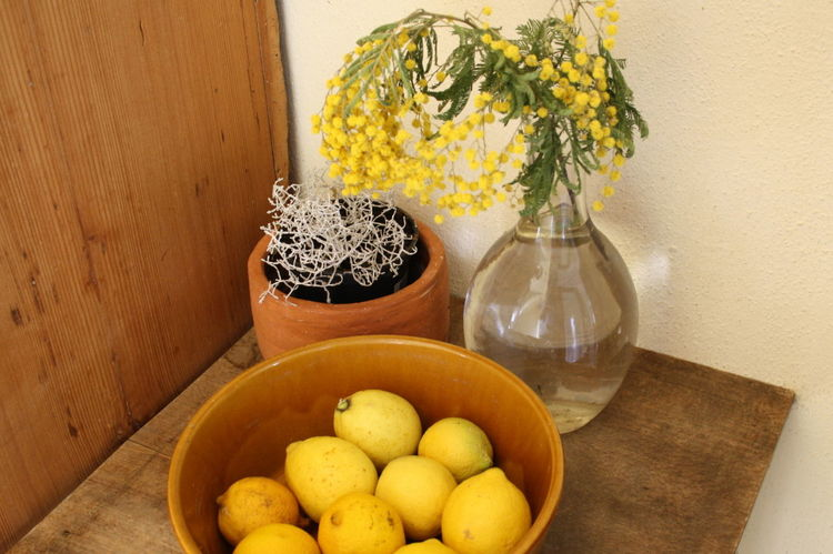 still life with lemon Flower Gelb Lemon Mimosa Mimose Still Life Stillleben Table Vase Yellow Zitrone