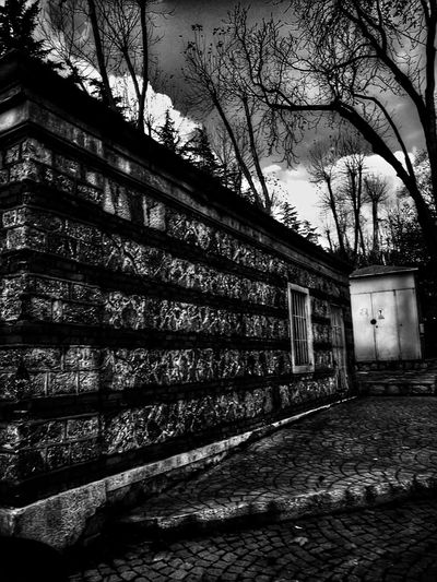 Built Structure Architecture No People Tree The Way Forward Building Exterior Day Outdoors Beykozkorusu BEYKOZAYRICALIKTIR. 😌😌😌 Istanbul City Green Color City Monocrome Black&white B&w B&w Photography B&W Collection B&W_collection