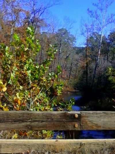 Taking Photos Fall Beauty Enjoying The View Bridge View Water Creek View Trees Colorfull Trees