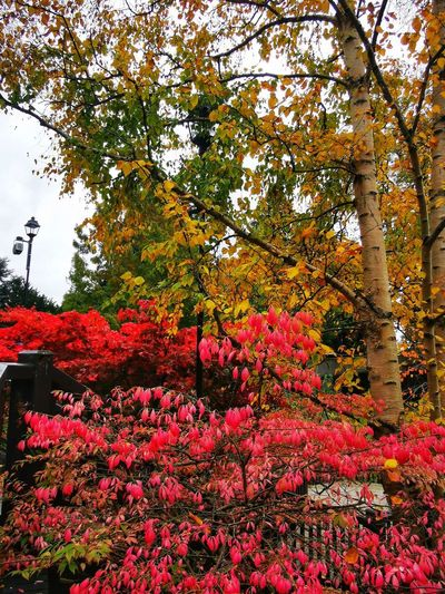 Red flowering plants in park during autumn