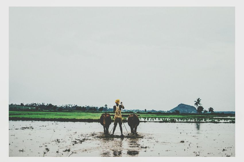 Agriculture Cowboy Mudwater Greenary EyeEm Best Edits India