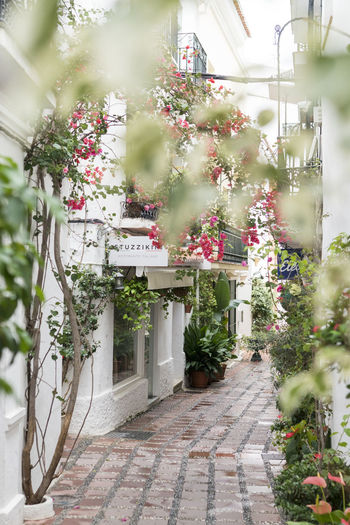Marbella MarbellaOldTown Old Town SPAIN Architecture Spanish Architecture Holiday Destination Vibrant Color Plant Built Structure Building Exterior Building Flower Growth Flowering Plant Nature Day No People House Outdoors Freshness Decoration Door Residential District White Color