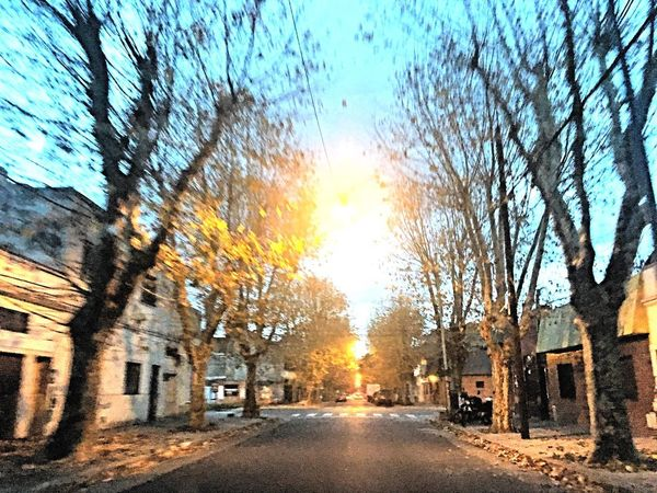 Melodyphdiaz Street Built Structure Architecture Building Exterior Tree Car Bare Tree No People Sky Sunlight Cloud - Sky Road Outdoors City Day Nature