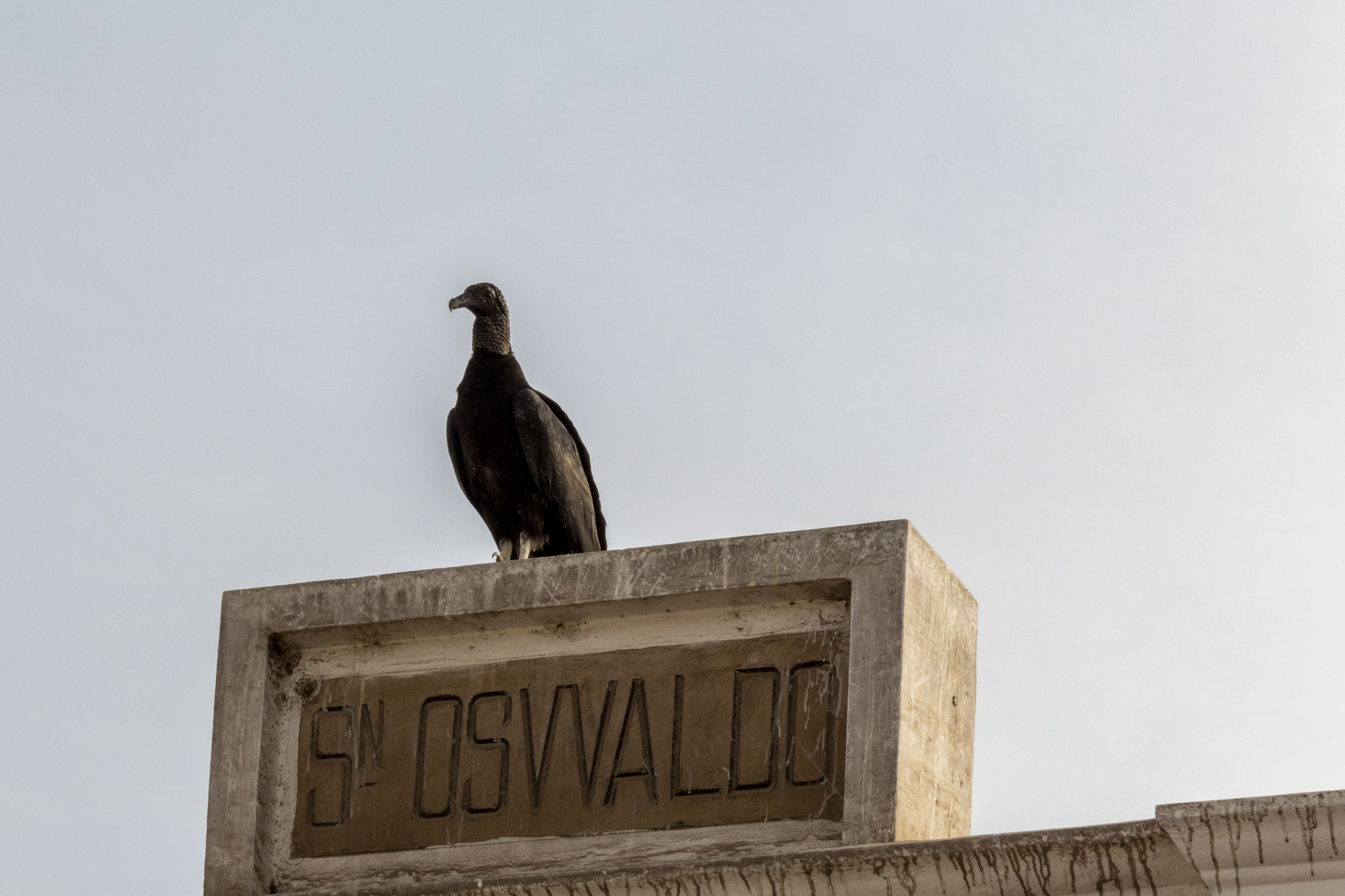animal themes, bird, animal, vertebrate, animal wildlife, animals in the wild, text, perching, sky, low angle view, one animal, western script, no people, day, communication, nature, architecture, copy space, outdoors, clear sky