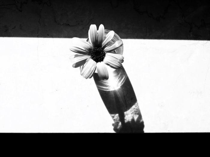🌼 Flower