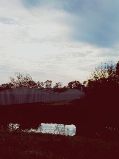 Tree Pixelated Sky Cloud - Sky