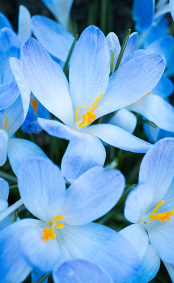 Flowering Plant Flower Plant Vulnerability  Beauty In Nature Fragility Petal Growth Close-up Inflorescence Freshness Flower Head No People Nature White Color Blue Day Full Frame Outdoors Pollen Purple Bright