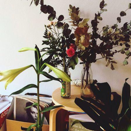 Thankyou Flowers Plant Porn