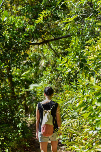 Rear View Of Mid Adult Woman Standing Amidst Trees In Forest