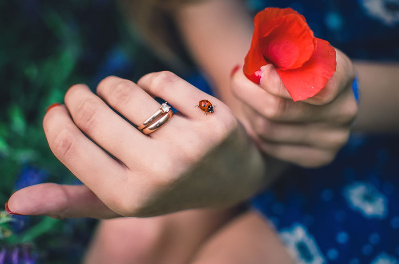 Close-up of woman hand holding red flower