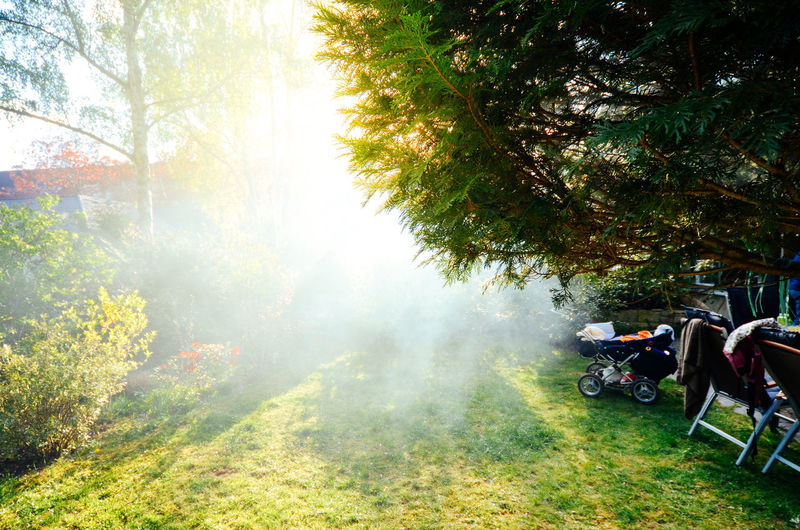 Beauty In Nature Day Fog Garden Garden Party Green Green Green!  Greenery Grill Grilling Growth Lens Flare Nature No People Outdoors Rays Of Light Sun Sunbeam Sunlight Sunlight Traveling Home For The Holidays Tree