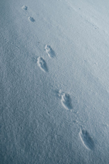 High angle view of footprints on snow