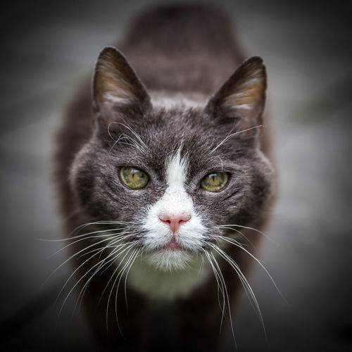 Cat looking at you Animal Cat Eyes Watching You Focus On Foreground Looking Looking At Viewer Looking At You Mammal Pets Whiskers