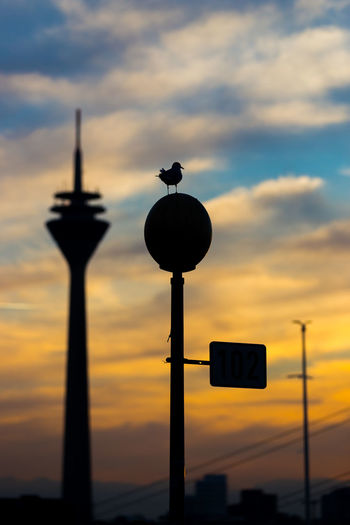 Düsseldorf, Germany Fernsehturm Laterne Möwe Sonnenuntergang Wolken Architecture Bird Built Structure City Cloud - Sky Dramatic Sky Gull Low Angle View No People Orange Color Outdoors Rheinturm  Seagull Silhouette Sky Sunset