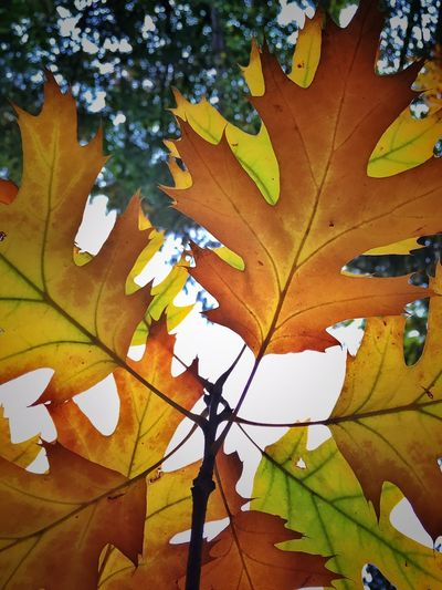 Low angle view of leaves