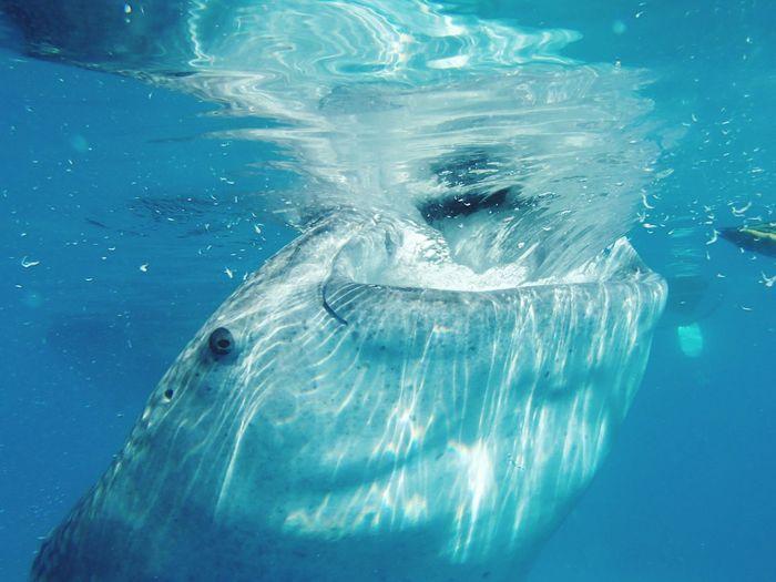 Mouth vacuum EyeEm Selects Animal Wildlife Sea Underwater Outdoors Close-up Vacations Wanderlust Lifeofadventure UnderSea Getoutside Explore The World