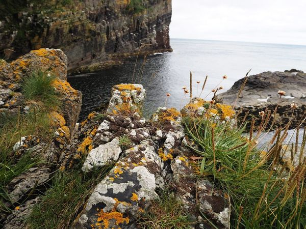 When we explored the Whaligoe Steps in Caithness Sea Water Horizon Over Water Beauty In Nature Flower Growth Nature Shore Cliff Rock - Object Rock Formation High Angle View Yellow Wildflower Scotland Calm Thinking New Angles  Exploring Adventure Walking Around Whaligoe Steps Caithness Outdoors On The Edge