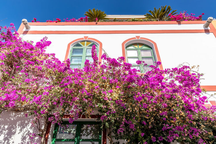 Low angle view of pink flowering plants by building