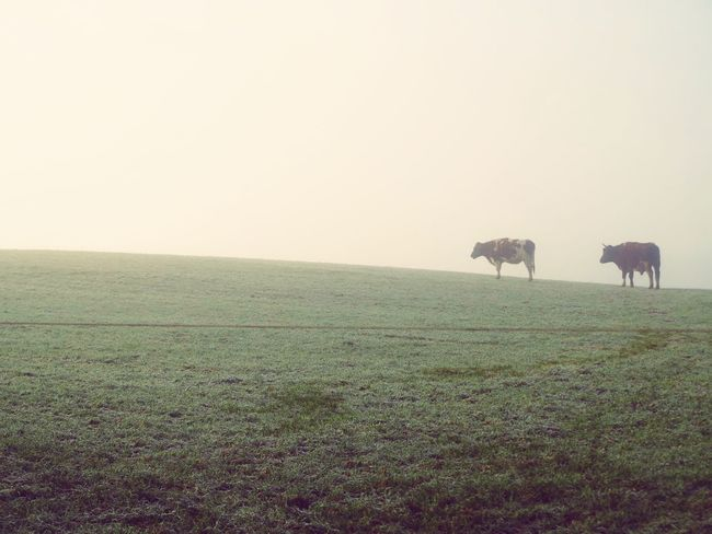 Fog Foggy Mist Cold Temperature Beauty In Nature Outdoors No People Animals In The Wild Nature Landscape Beauty In Nature Clear Sky