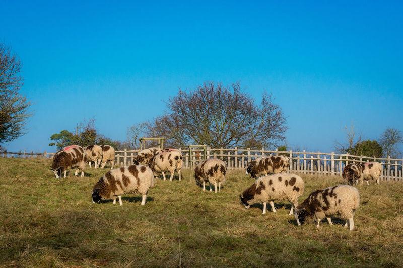 Flock of sheep on tree against sky