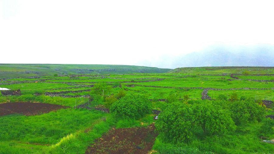 Gabar First Eyeem Photo