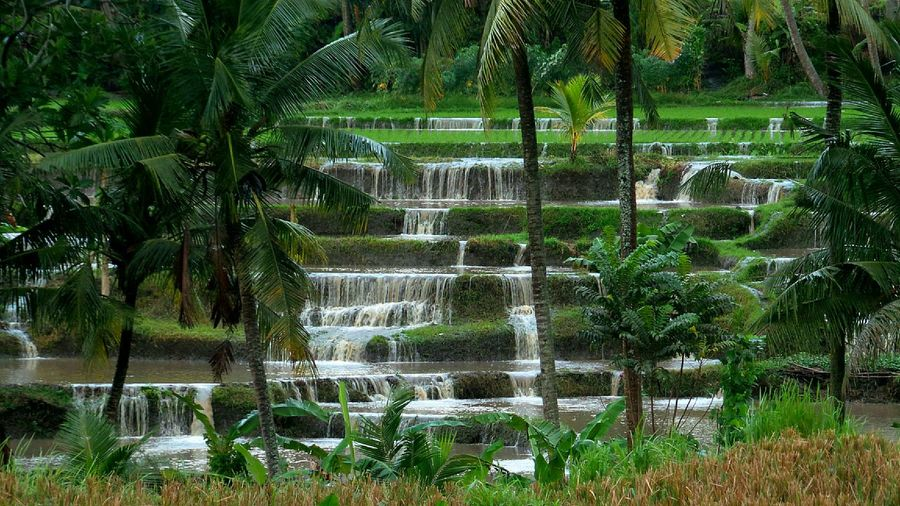 Bali Bali Ubud Ricefields Jeanmart Bali 16:9 Overflow Verybalitrip Very Bali Trip
