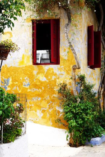 Greece Window Street From Where I Stand Urban Street Plant Architecture Built Structure Building Exterior Building Window House No People Day Entrance Door Yellow Nature Outdoors Residential District Wall - Building Feature Wall Open Sunlight
