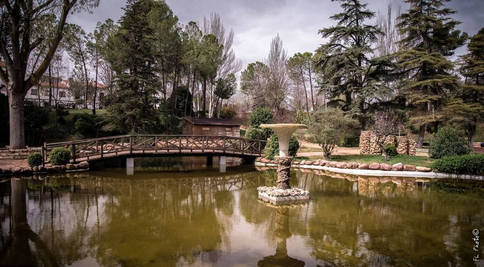 Park From My Point Of View FranLas EyeEm Nature Lover Nature Water Reflections Photography Enjoying Life