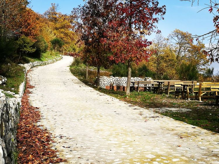 Stone Pathway Fall Season Fall Colors Fall Foliage Walkway