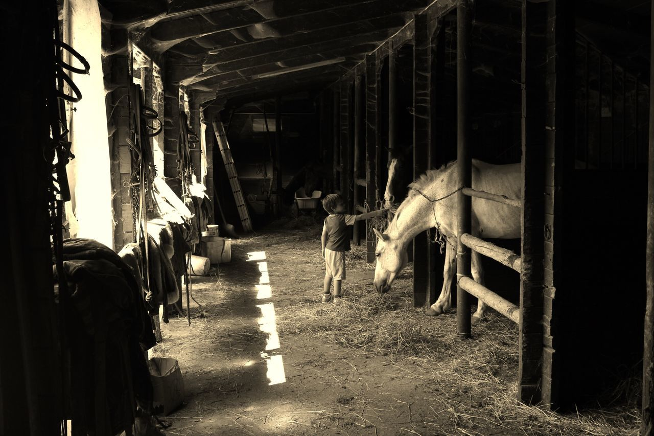 indoors, domestic animals, livestock, animal themes, the way forward, day, real people, mammal