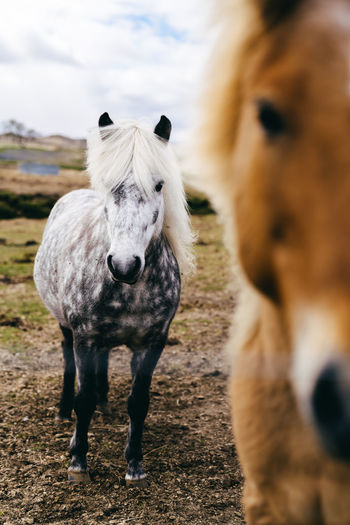 Portrait of a horse on field