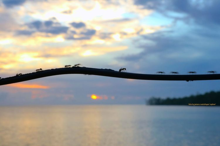 A group of ants walking along the ropes and cheerfully singing and greeting each other to enjoy the beaches of Siberut island, Mentawai Islands and the ant while saying 'good morning sunrise'. Animal Ant Canon EOS 600D DSLR Canon M3 Insect Insect Photography Sea Sea And Sky Seascape SeaScapePhotography Sky And Clouds Sunrise
