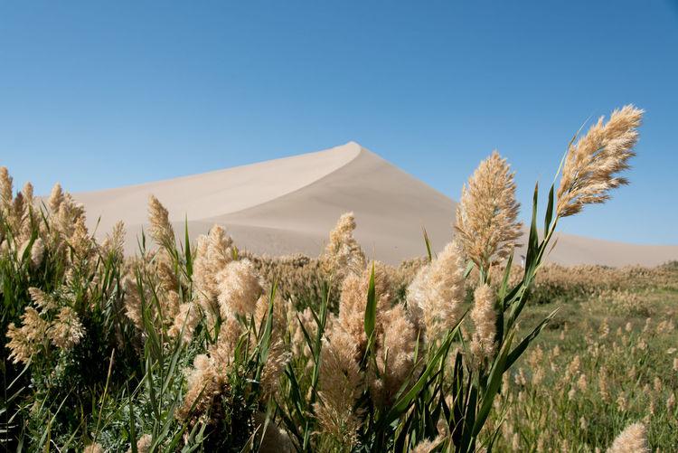 Singing Sand