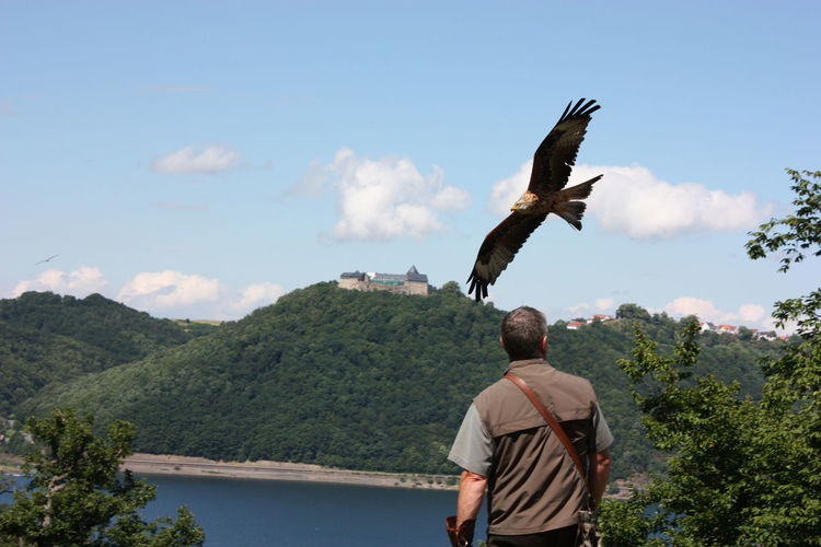REAR VIEW OF MAN With Eagle STANDING ON MOUNTAIN