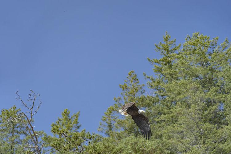 Eagle Bird Bird