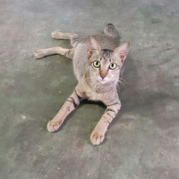 EyeEm Selects Pets Cats Of EyeEm Eyem Cute Cats Hello World Thailand_allshots Cat