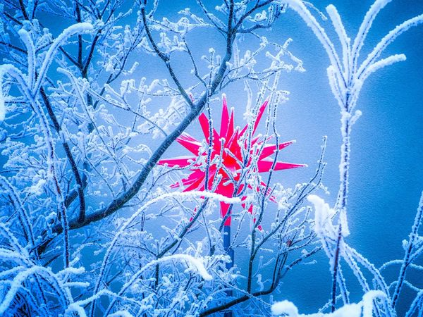 Winter Snow Nature Red Cold Temperature Tree Outdoors Beauty In Nature Plant Christmas Decoration Red Star Christmas Lights Shades Of Winter