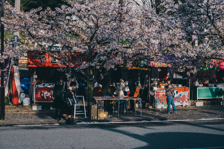 View of cherry blossom tree in city