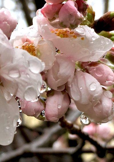 Drop Raindrops