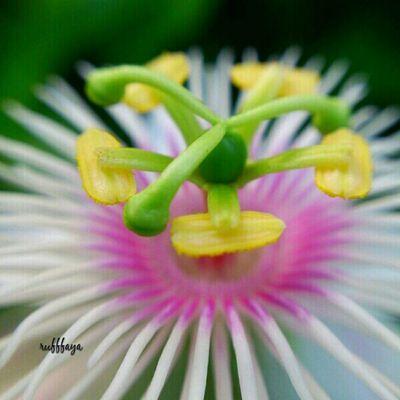 macro a flower.