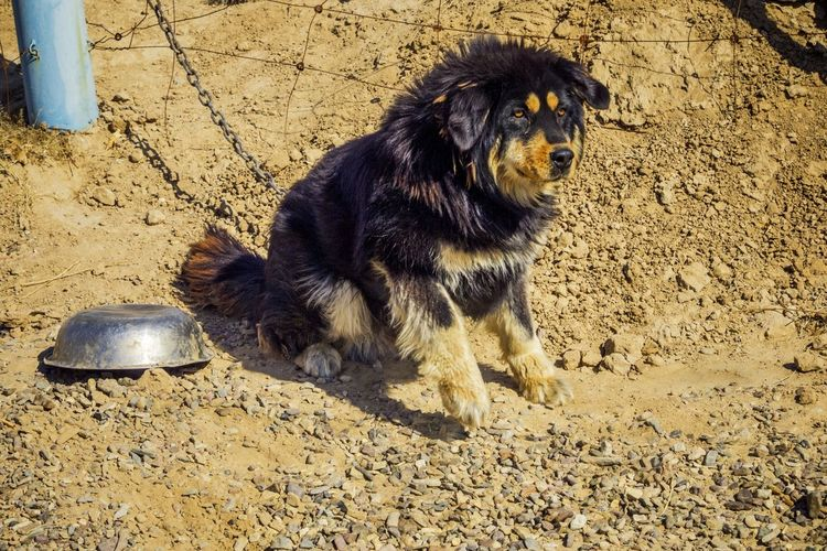 Close-Up Of Dog Sitting On Dirt