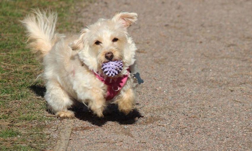 Dog Pets Domestic Animals Animal Themes One Animal Mammal Outdoors